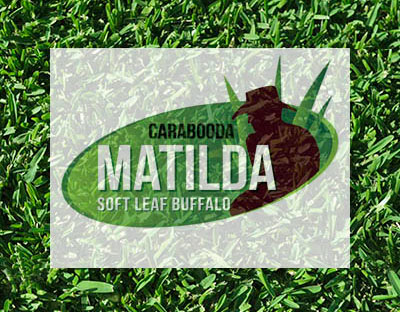 Matilda Soft Buffalo Turf