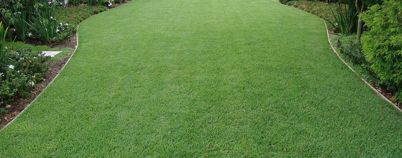 Buffalo Grass Perth