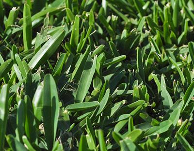 Turf Farm Perth